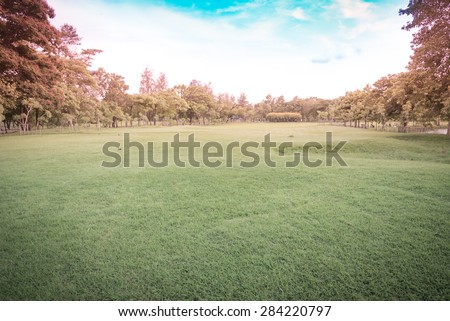 Green grass on a golf field - Vintage retro picture style - stock photo