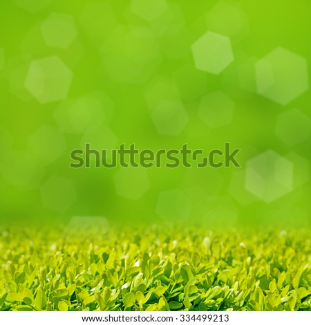 Green grass on a green background with bokeh - stock photo