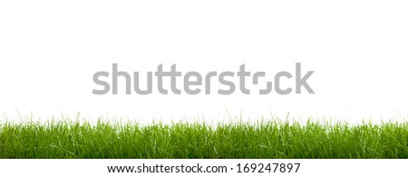 green grass on a white background - stock photo
