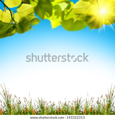 green grass on the summer field - stock photo