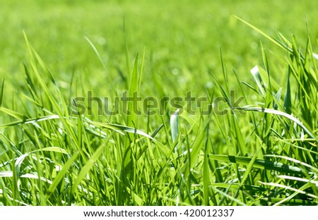 green grass out of focus with a blurred background - stock photo