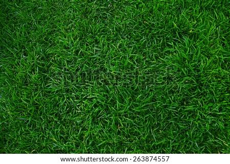 Green grass pattern - stock photo