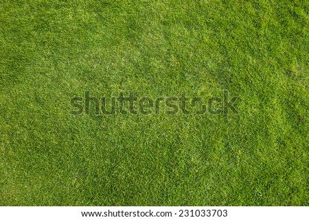 Green grass pattern image. Top view angle. - stock photo