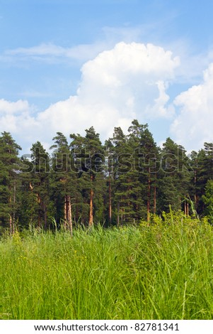 green grass, pine trees in midday - stock photo