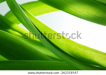 Green grass, plants background with white copy-space. Fresh, nature, nature composition. - stock photo