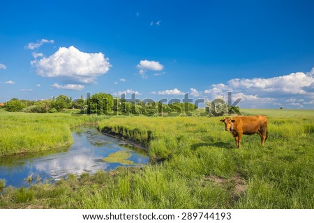 green grass, river, clouds in blue sky and cows - stock photo