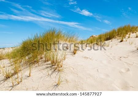 Green grass sand dune desert landscape, Slowinski National Park near Leba, Baltic Sea, Poland - stock photo