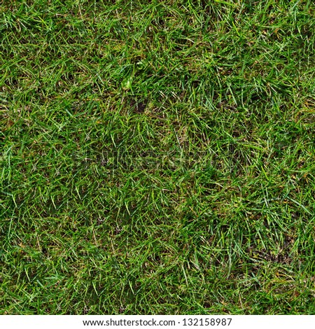Green Grass. Seamless Tileable Texture. - stock photo