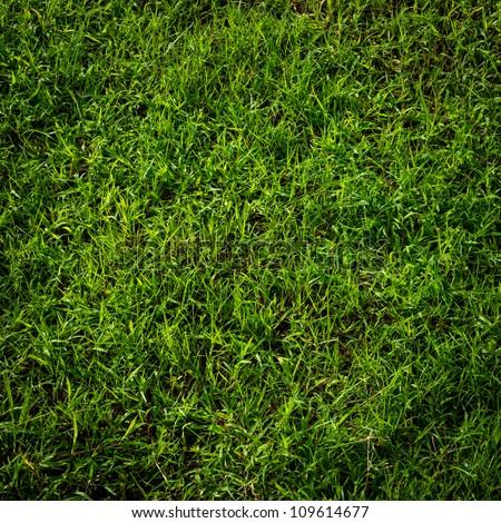 Green grass surface - stock photo