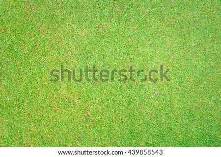 Green grass texture. - stock photo