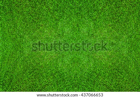 Green grass texture for background. Natural abstract background for soccer sport or football sport and golf sport. - stock photo