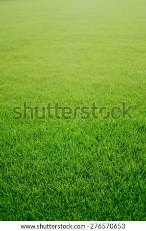 Green grass texture from a soccer field - stock photo