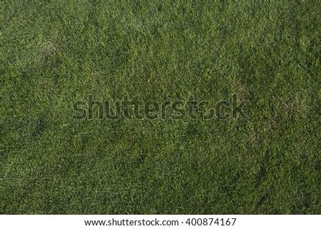 green grass texture. Texture of green grass on a golf course - stock photo