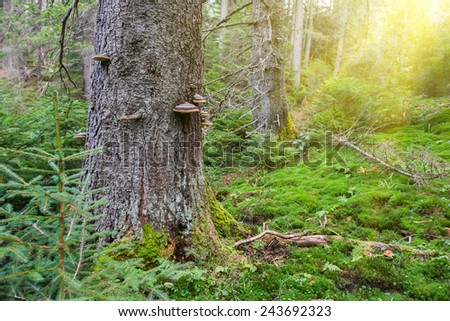 Green grass under big trees in the forest with sunny light - stock photo