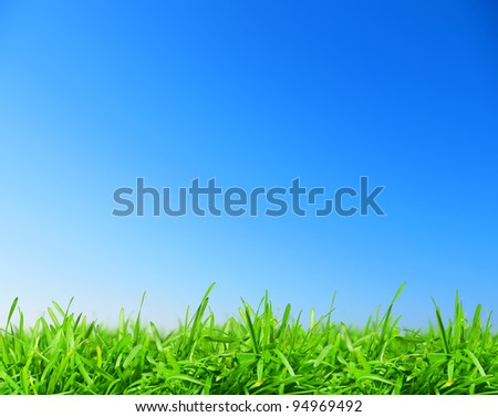 green grass under blue sky - stock photo