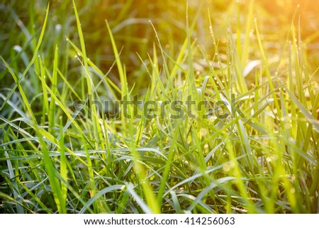 Green grass under the morning sunlight. - stock photo