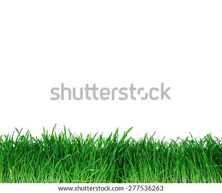 Green grass us background - stock photo
