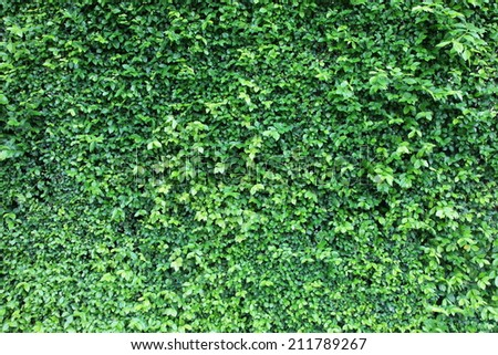 green grass wall in big city park - stock photo