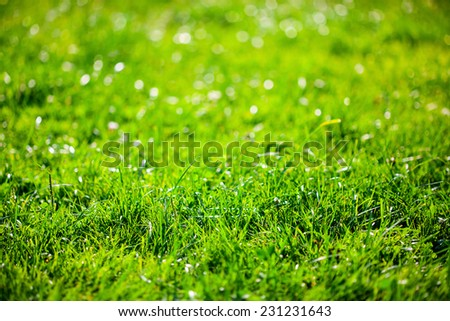 Green grass with bokeh background - stock photo