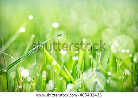 Green grass with dew in the morning sun - stock photo