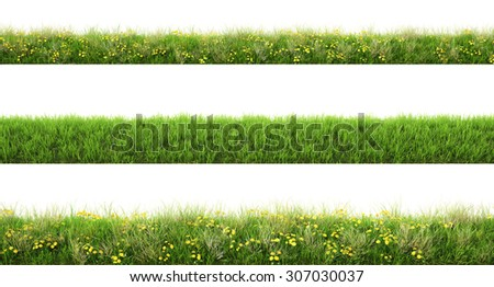 Green grass with flowers. isolated on white background. - stock photo