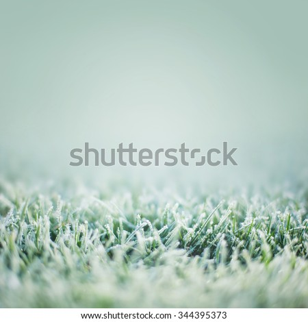 Green grass with frost, winter background - stock photo