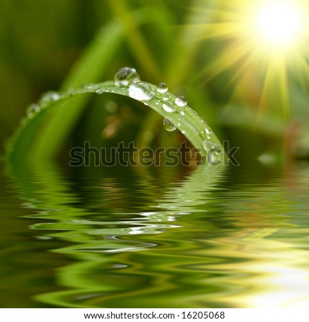 Green grass with raindrops background - stock photo