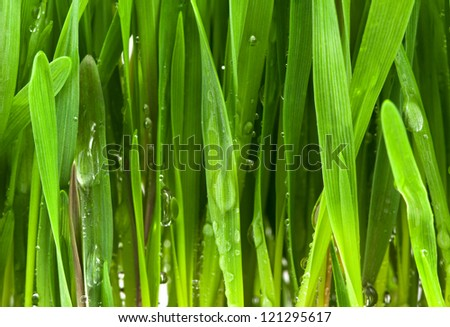 Green grass with water drops background, Close-up - stock photo