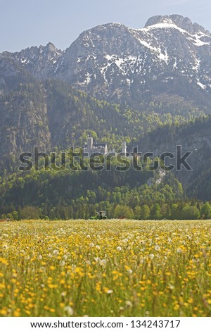 Green grassland and Neuschwanstein Castle,   and mountains in bavaria - stock photo