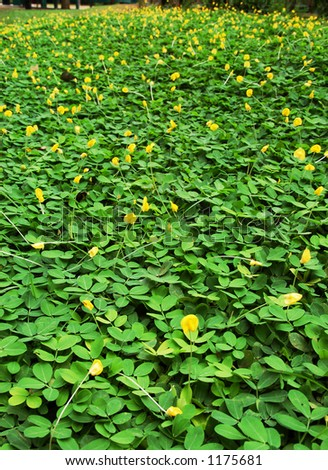 Green grassy pacth with yellow flowers (more images in gallery) - stock photo