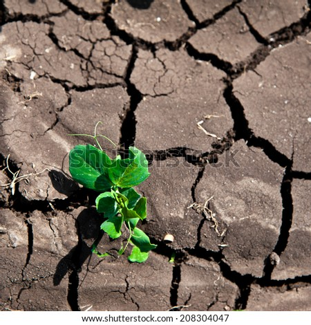 Green / growing plant from drought - stock photo
