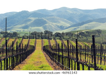 green growth in central coast, california - stock photo