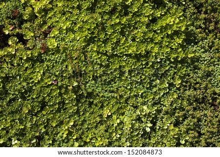 Green grunge wall background outdoors - stock photo