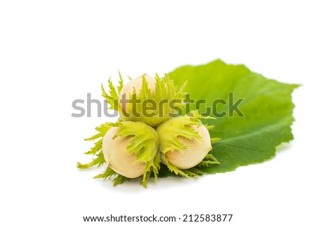 green hazel nut on a white background - stock photo
