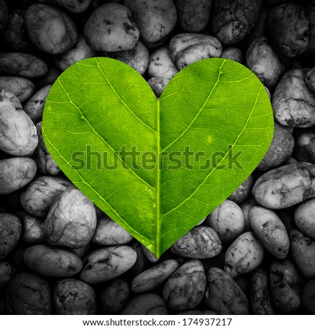 Green heart made of green leaf, On black and white stone texture. - stock photo
