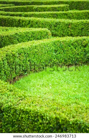 Green hedge labyrinth - stock photo