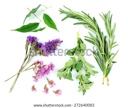 Green herbs and leaves isolated on white - stock photo