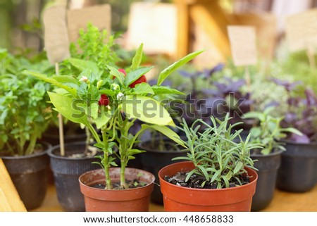 Green herbs in pots with signs for the label. Gardening trends. - stock photo