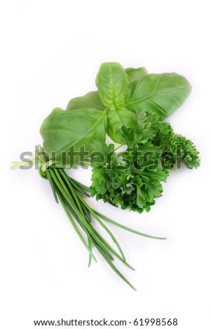 green herbs on white background - stock photo