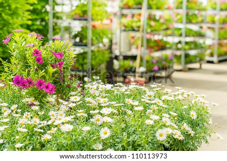 Green house shop with potted flowers at garden centre - stock photo