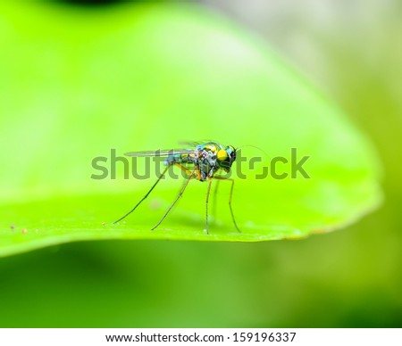 Green insect - stock photo