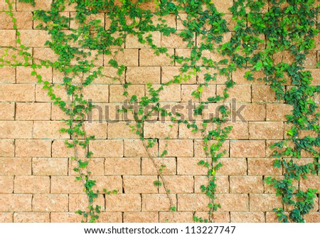 Green ivy on the brick wall - stock photo