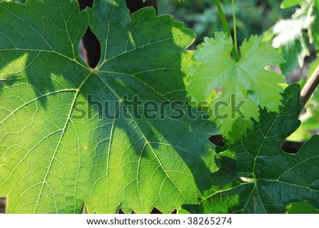 Green juicy colour leaves of plants in wildlife - stock photo