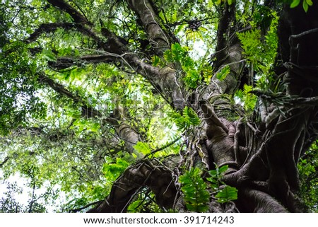 Green juicy crone tropical tree with incredible branches . tropical forest in Indonesia. - stock photo