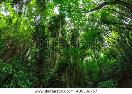 green jungle - stock photo