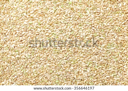 green kerneled rice , Unripe rice - stock photo