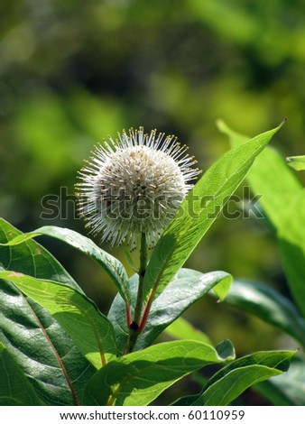 Green kind of flower - stock photo
