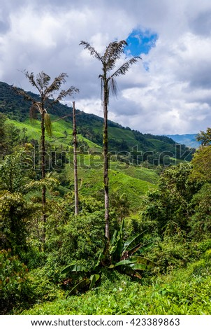 Green landscape of Cameron highlands, Malaysia - stock photo