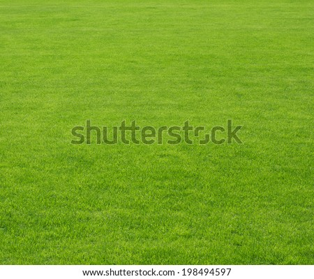 green lawn background - stock photo