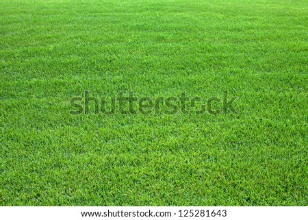 Green lawn for background - stock photo